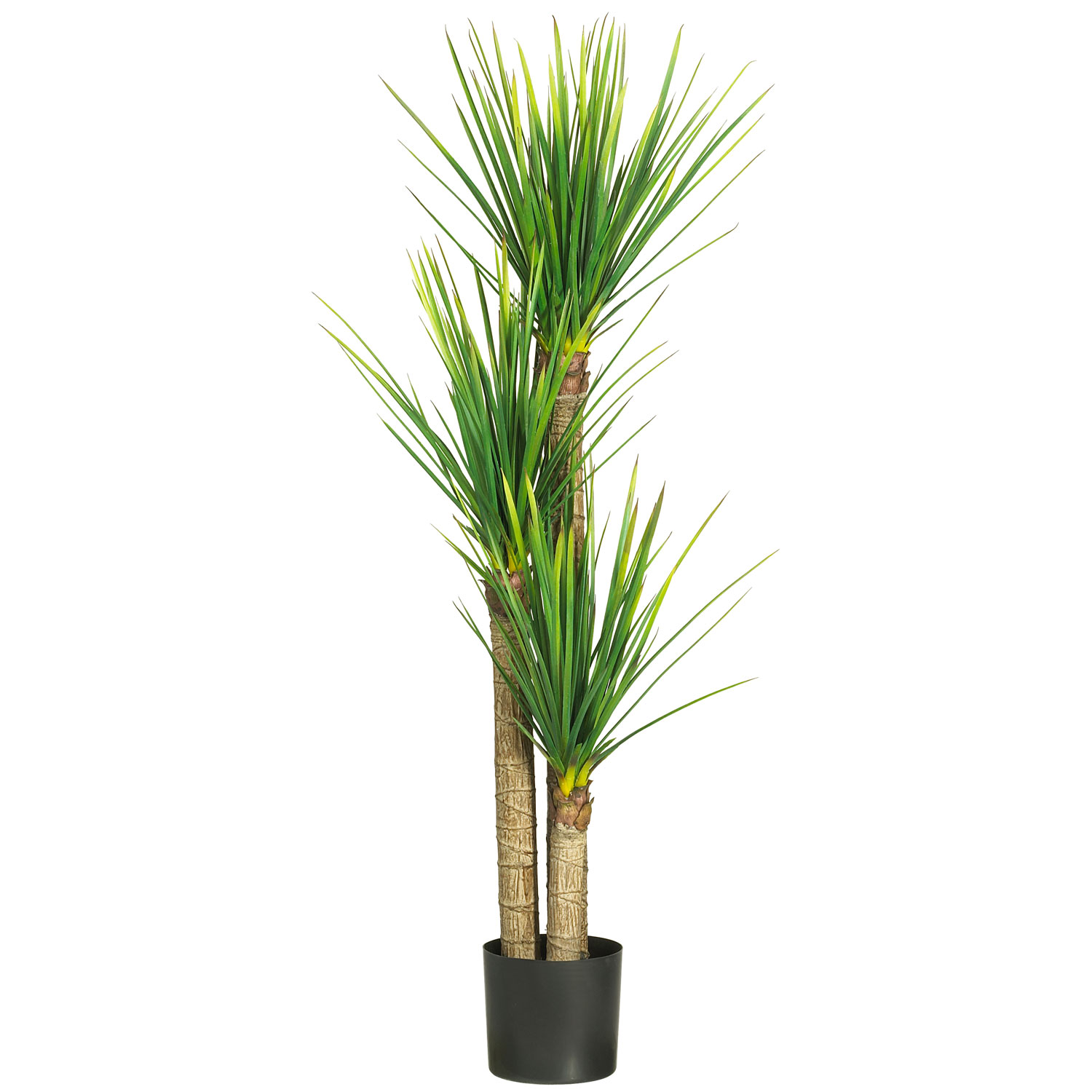 yucca cane plant vancouver plant rentals. Black Bedroom Furniture Sets. Home Design Ideas