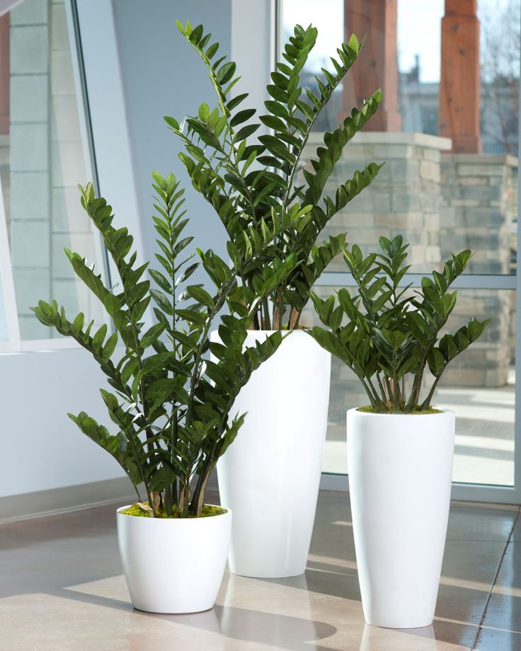 Zz Plant Decor Home